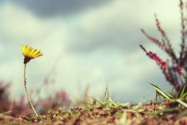flower-815301_960_720