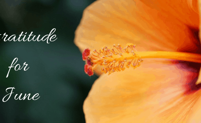 Gratitude for June: The Ups, Downs & the Steady