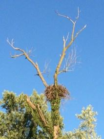 Nest Antlers