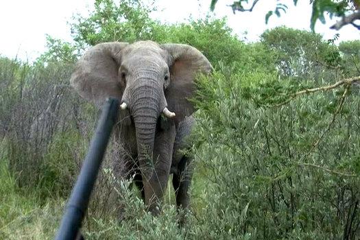 550 Magnum& Elephant