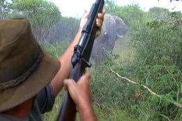 .550 Magnum & Elephant