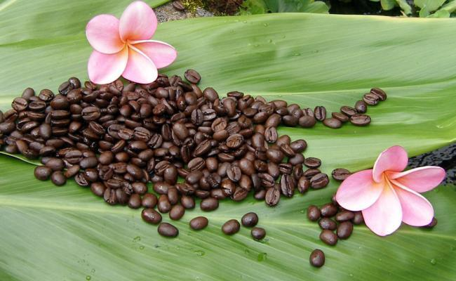 Facts about Kona Coffee