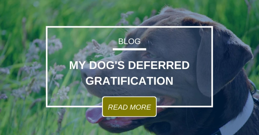 My Dog's Deferred Gratification
