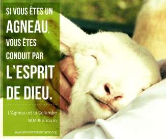 Si vous êtes un agneau, vous êtes conduit par l'esprit de Dieu.