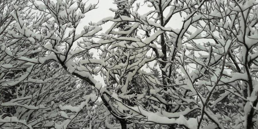 BarAThon-BAR-blogarthythm-fault-in-our-stares-blogging-challenge-of-ice-and-men-body-shaming-slut-shaming-snow-maiden-ice-queen