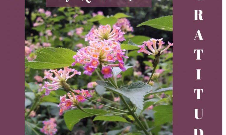 gratitude september to remember morning walks lantana flowers october