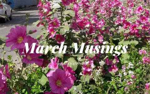 march musings hollyhocks flowers spring gratitude blessings thankfulness