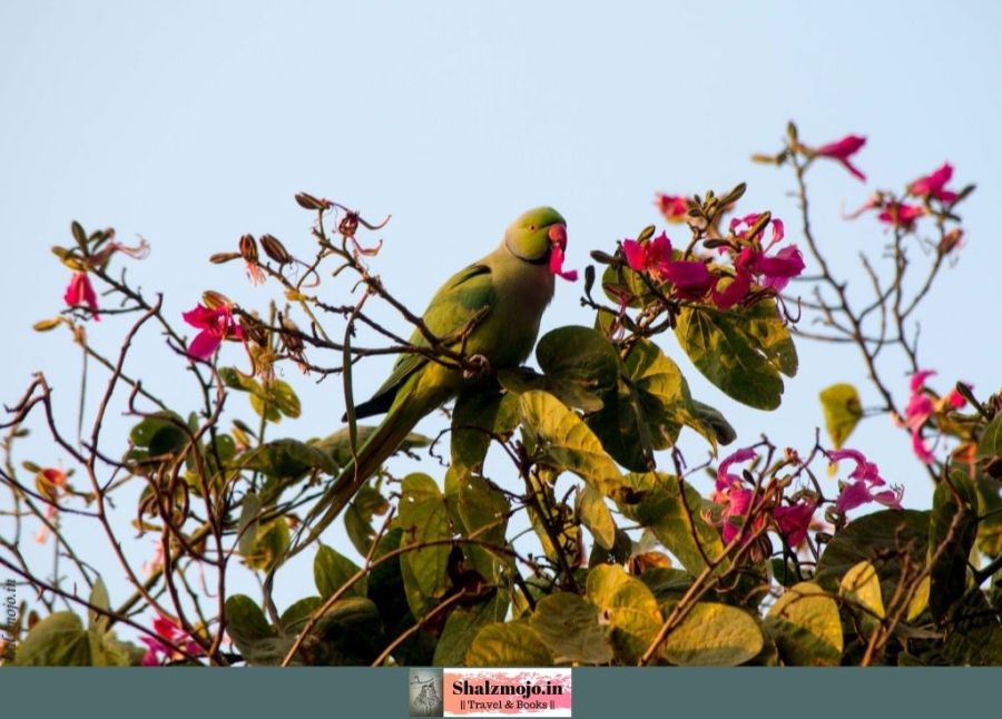 parrot in the purple orchid tree