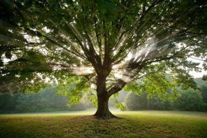 Luz da árvore do xamanismo