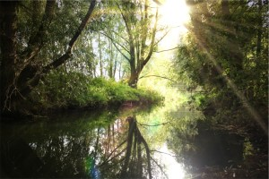 woods reflecting river