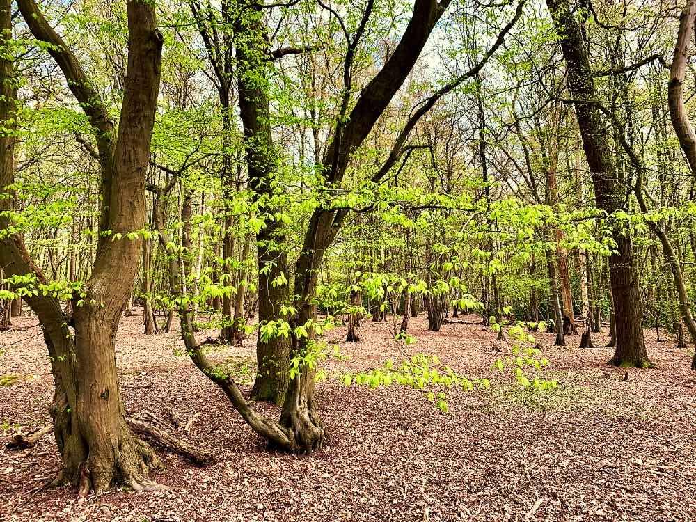 Ruislip Woods Nature Reserve