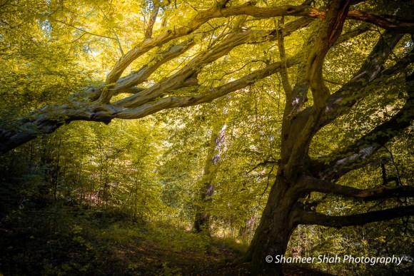 Fallen tree photography