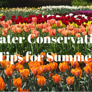 Water Conservation Tips for Summer