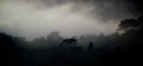 Fog day