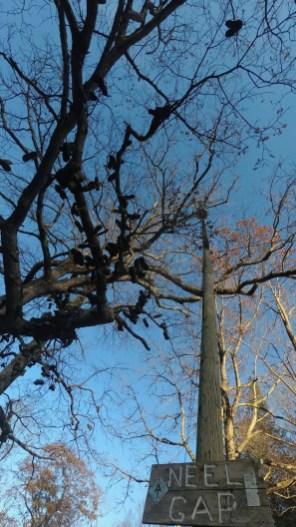 Kneel Gap Boot Tree