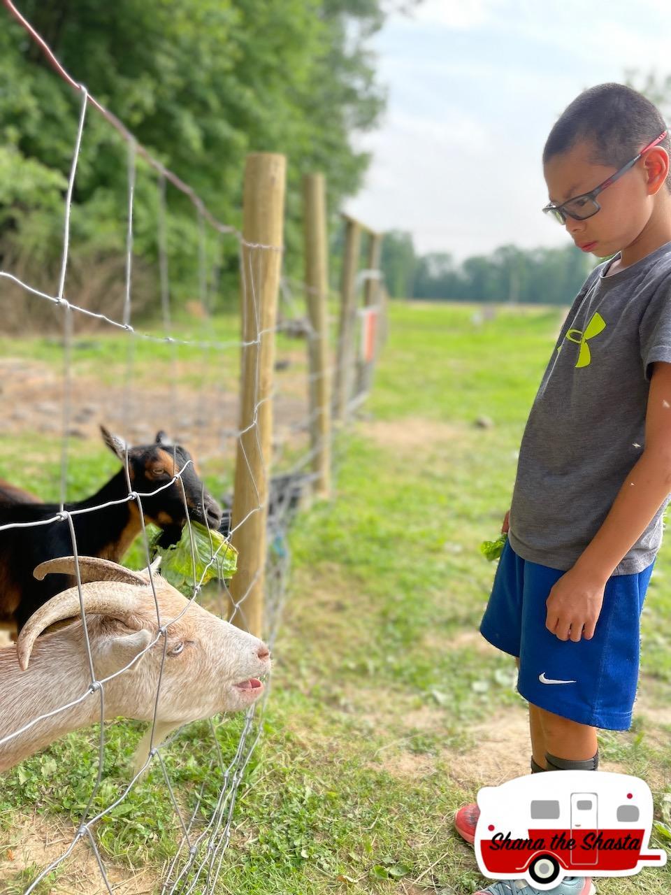 Feeding-Goats-at-Arrowhead-Bike-Farm