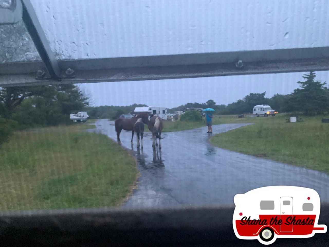 Navigating-Aggressive-Wild-Horses-on-Assateague