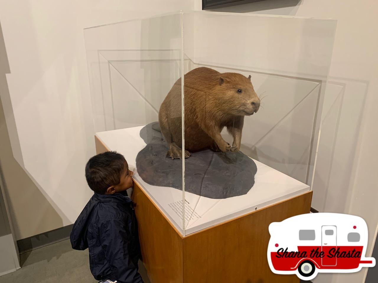 Nice-Beaver