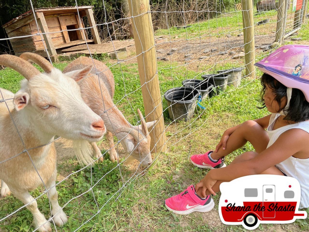 Petting-Goats-at-Arrowhead-Bike-Farm