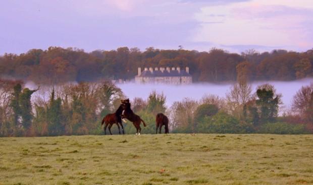Horses at Play , Co. Kilkenny