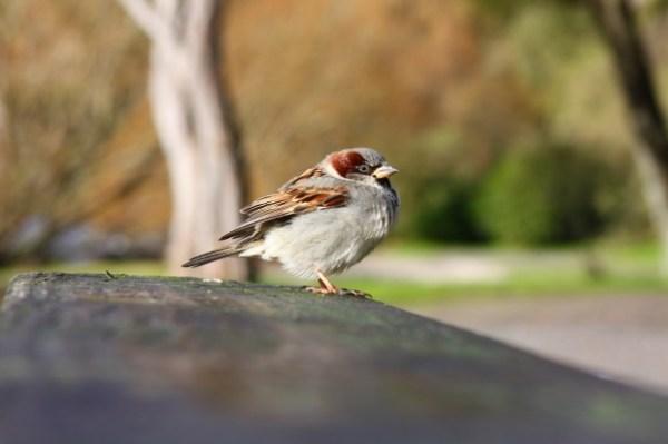 Small Bird at Lake Taupo, New Zealand