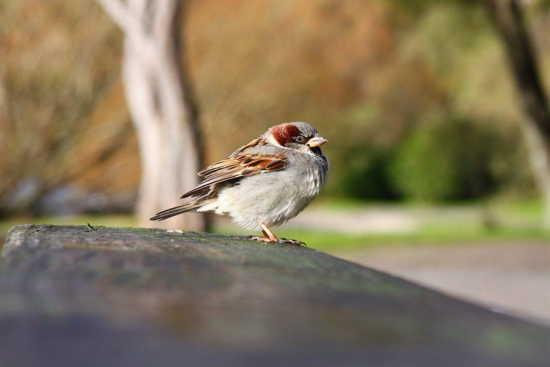 New Zealand, Lake Taupo Bird