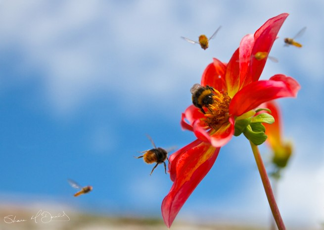 Bees landing on Flowers - Summer Bees and Summer Flowers