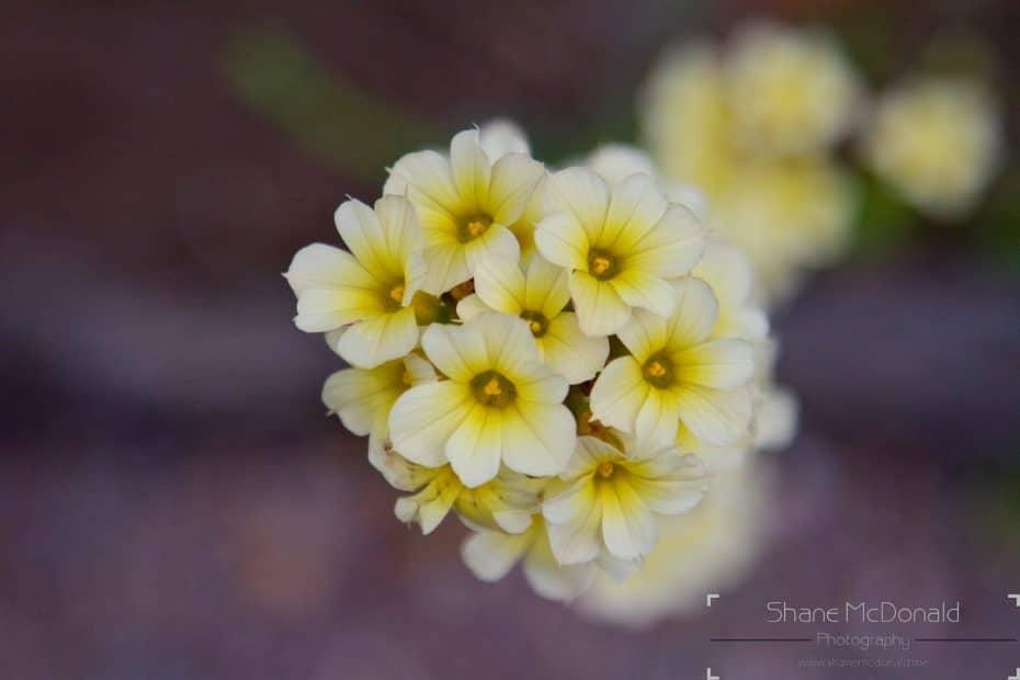 Flowers on Garnish Island