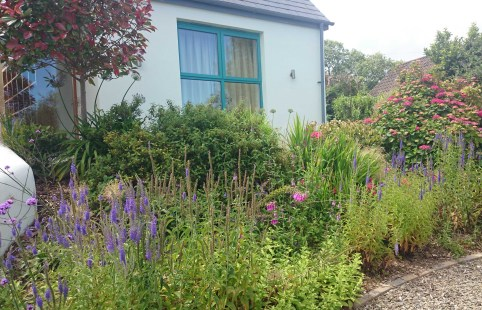 Lots of colour is the order of the day for the beds that lead to the entrance of the house.