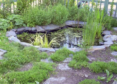 School Grounds - Wildlife pond
