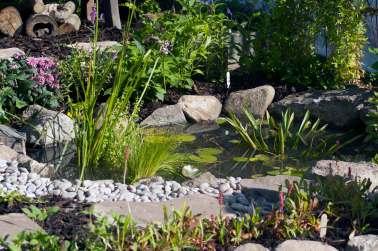 wildlife pond, wildlife trust