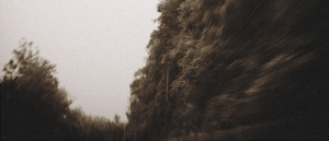 A black-and-white photos of trees and light poles, with blurred effects.