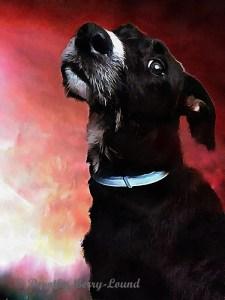 Dog with attitude