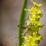 katydid-nymph-at-jacobs-well-nature-area