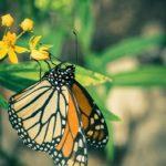 vintage-monarch-3