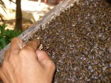 """On our days off we'd take tours and visit local spots. This beekeeper insisted we put our fingers into the comb to taste absolutely fresh honey. When we hesitated, he said, """"Vietnamese bees are like the Vietnamese people: small and friendly."""""""