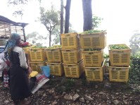 We came upon a group of women weighing in their tea leaves during a lunch break.
