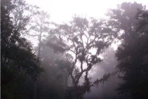 4593344-Misty_mysticism_surrounds_you_at_every_turn_Daufuskie_Island