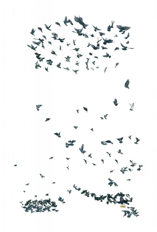 pigeon_web