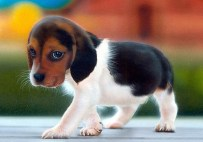 Puppy-01