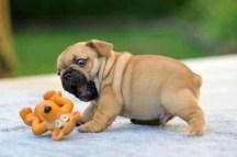Puppy-05