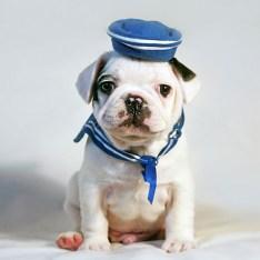 Puppy-06