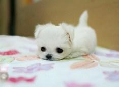 Puppy-19