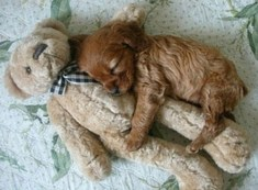 Puppy-22