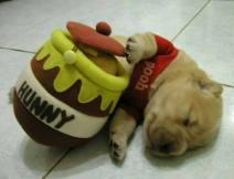 Puppy-23