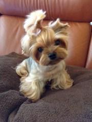 Puppy-34