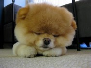 Puppy-44