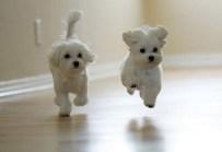 Puppy-45
