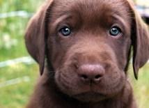 Puppy-46