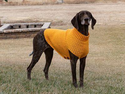 crochet Large Dog Sweater free pattern